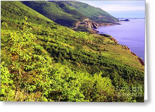 Cape Breton Highlands National Park Greeting Card by Thomas R Fletcher