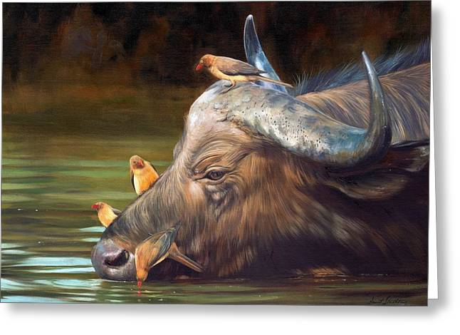 Cape Buffalo And Oxpeckers Greeting Card by David Stribbling