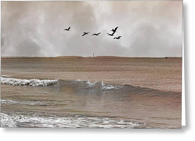 Cape Lookout Pelicans Greeting Card by Betsy Knapp