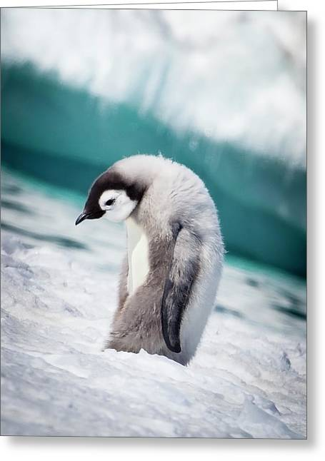 Cape Washington, Antarctica, Emperor Greeting Card by Janet Muir