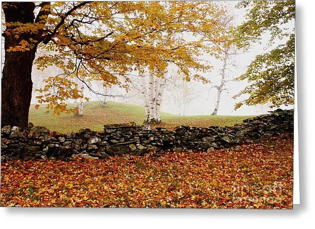 Caper Hill Birch Greeting Card by Butch Lombardi