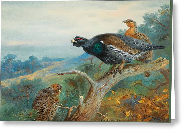 Capercaillie Greeting Card by Archibald Thorburn