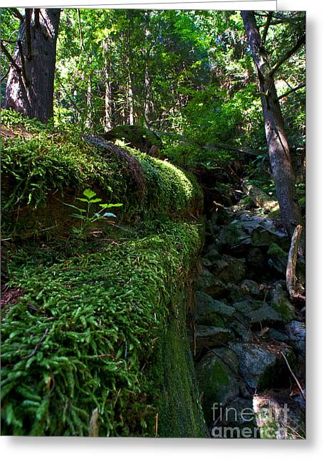 Capilano River Canyon 1 Greeting Card by Terry Elniski