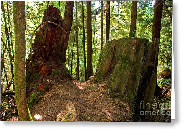 Capilano River Canyon 2 Greeting Card by Terry Elniski