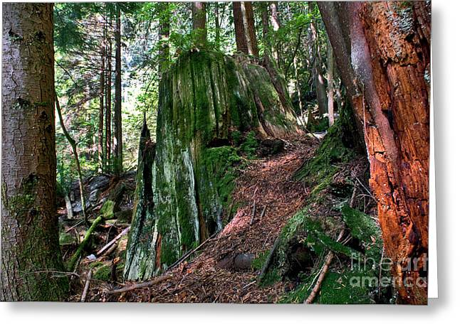 Capilano River Canyon 3 Greeting Card by Terry Elniski