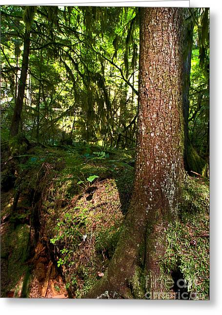 Capilano River Canyon 7 Greeting Card by Terry Elniski