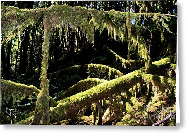 Capilano River Canyon 8 Greeting Card by Terry Elniski