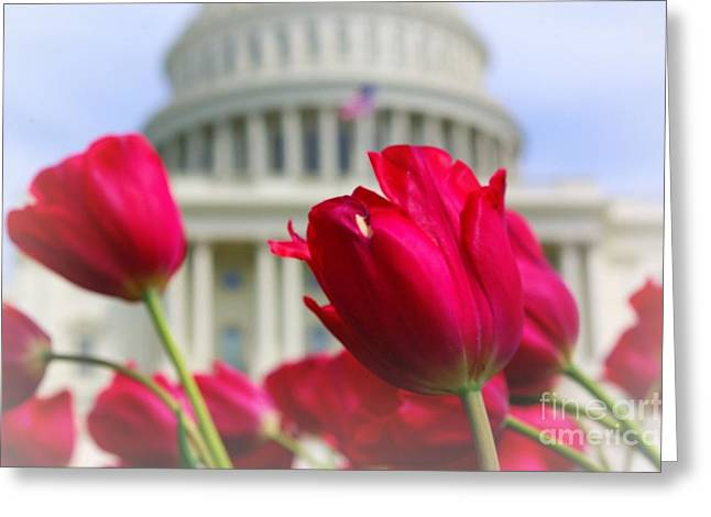 Greeting Card featuring the photograph Capital Flowers  by John S