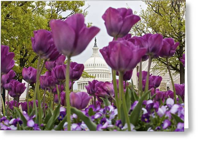 Capitol With Tulips Greeting Card