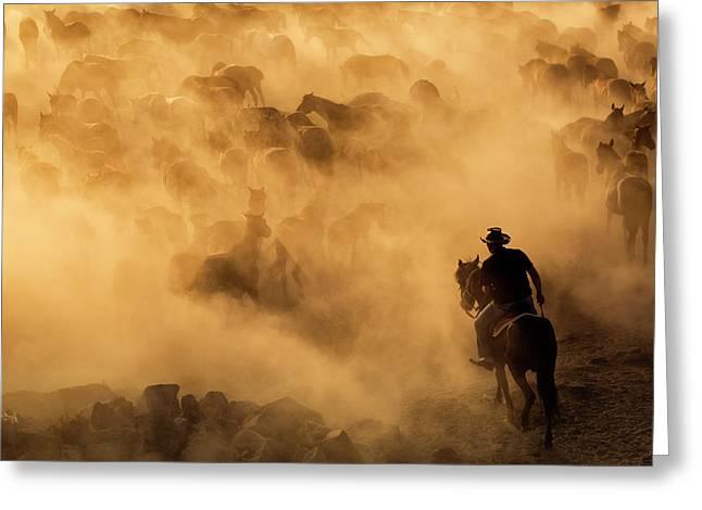 Cappadocia Wild Horses Greeting Card