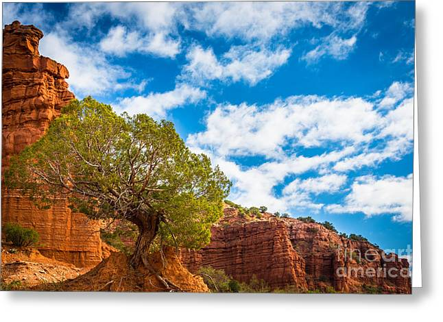 Caprock Canyon Tree Greeting Card by Inge Johnsson