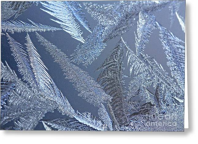 Captivated By Frost- Canada's Polar Chill Greeting Card by Inspired Nature Photography Fine Art Photography