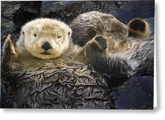 Captive Two Sea Otters Holding Paws At Greeting Card