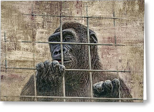 Captivity Greeting Card by Tom Mc Nemar