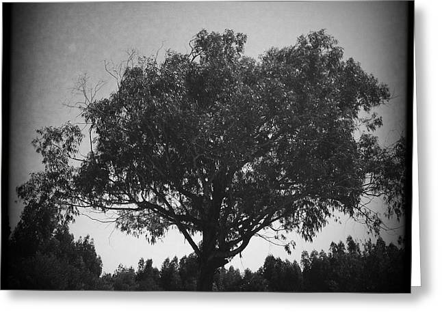 Car Parked Under A Tree Greeting Card by Marco Oliveira