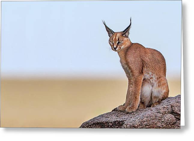 Caracal On Mars Greeting Card
