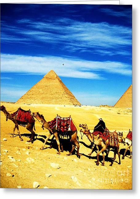 Caravan Of Camels 2 Greeting Card