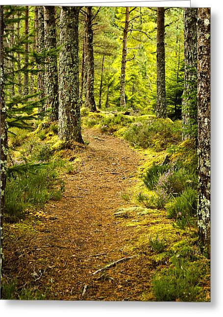 Carbisdale Path Scotland Greeting Card by Sally Ross