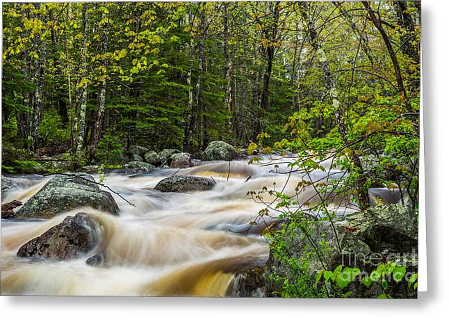 Card Mill Stream In Spring Greeting Card by Susan Cole Kelly