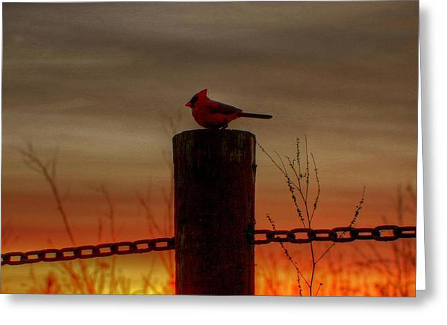 Cardinal At Sunset Greeting Card by Larry Trupp
