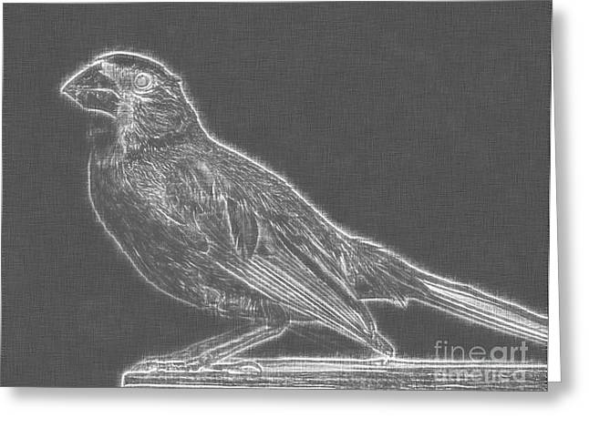 Cardinal Bird Glowing Charcoal Sketch Greeting Card by Celestial Images