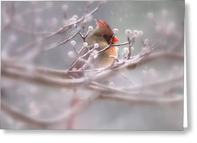 Cardinal - Bird - Lady In The Rain Greeting Card by Travis Truelove