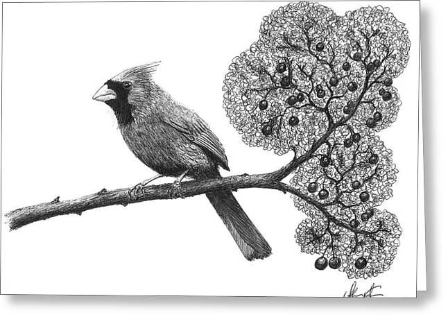 Cardinal Bird On Branch Greeting Card by Adam Vereecke