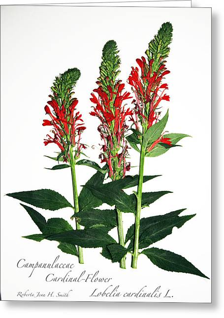 Cardinal-flower Greeting Card