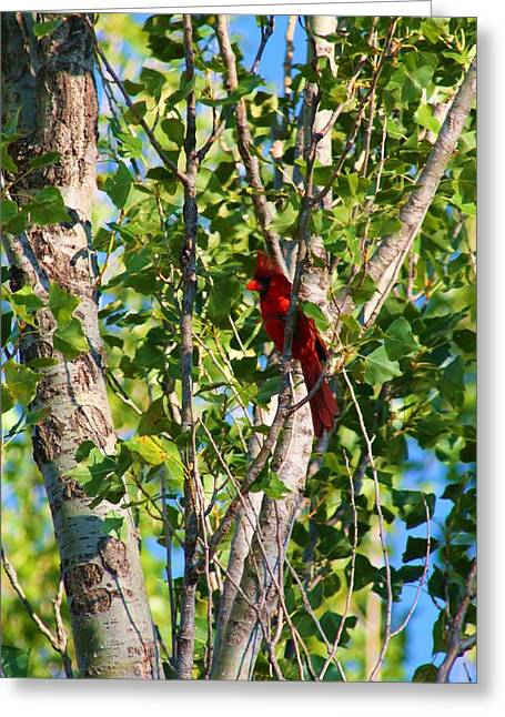 Cardinal Hidden Greeting Card by Alicia Knust