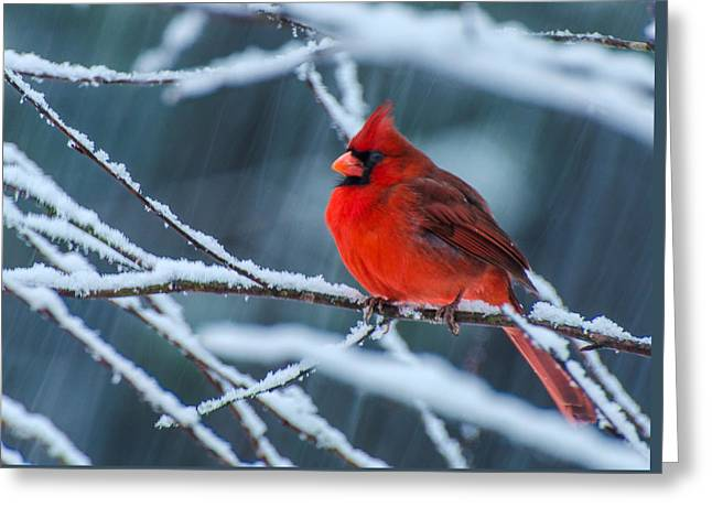Cardinal In A Storm  Greeting Card