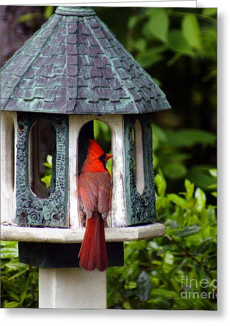Cardinal In Bird Feeder Greeting Card