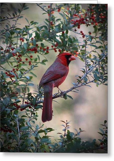 Cardinal In Fayetteville Texas Greeting Card by Beth Wiseman