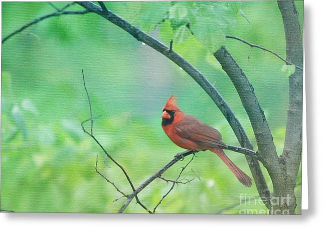 Cardinal In Rain Greeting Card