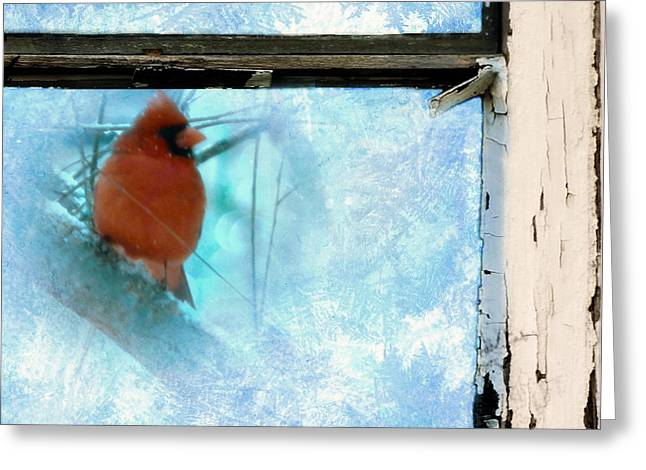 Cardinal In The Frost Greeting Card