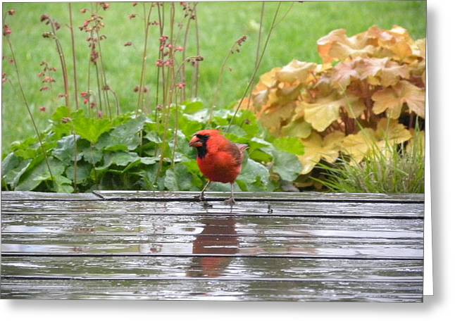 Greeting Card featuring the photograph Cardinal In The Rain by Teresa Schomig