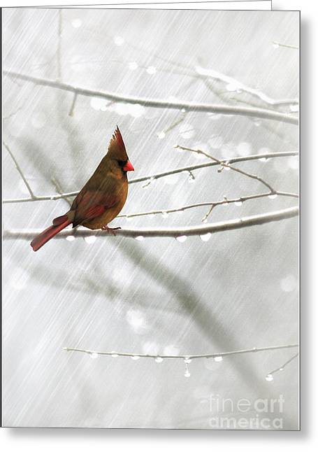 Cardinal In The Rain Greeting Card by Tom York Images