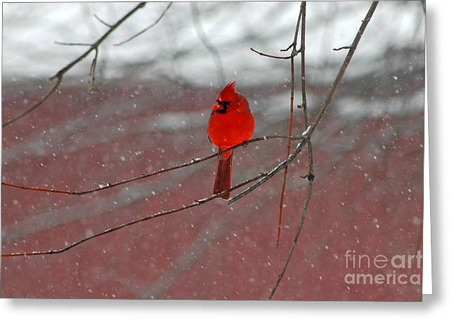 Cardinal In Winter Greeting Card by Olivia Hardwicke