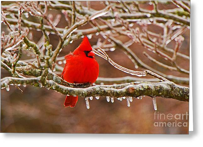 Cardinal Greeting Card by Mary Carol Story