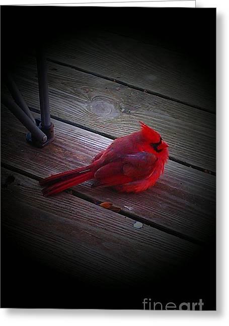 Cardinal Greeting Card by Nick