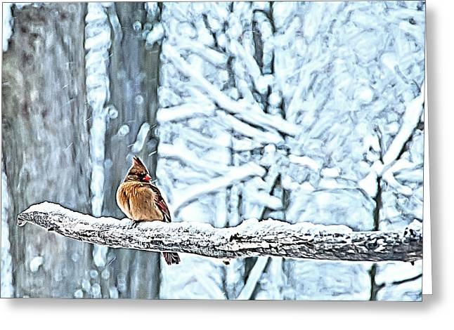 Cardinal No Mate To Keep Warm Greeting Card by Randall Branham