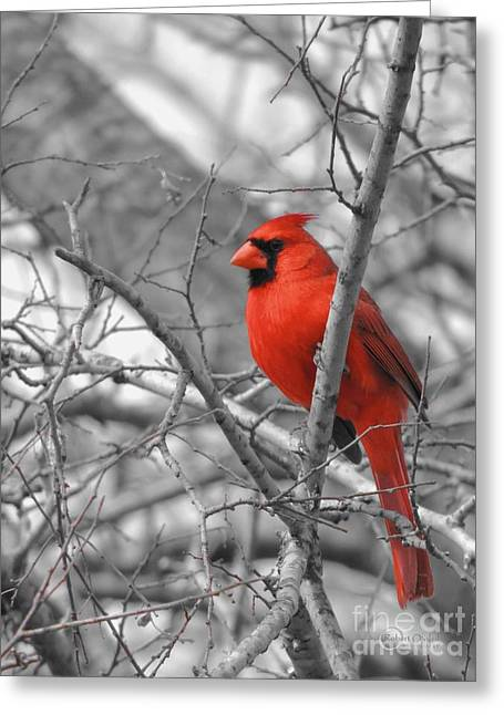 Cardinal Of Hope 002sc Greeting Card by Robert ONeil