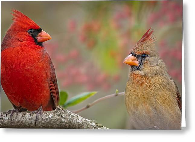Cardinal Pair Greeting Card by Bonnie Barry