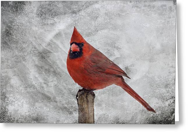 Cardinal Watching Greeting Card by Sandy Keeton