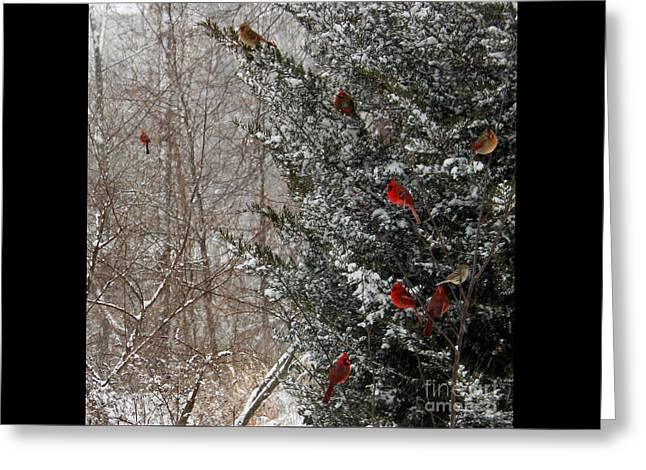 Cardinals In Winter 1 Square Greeting Card by Karen Adams