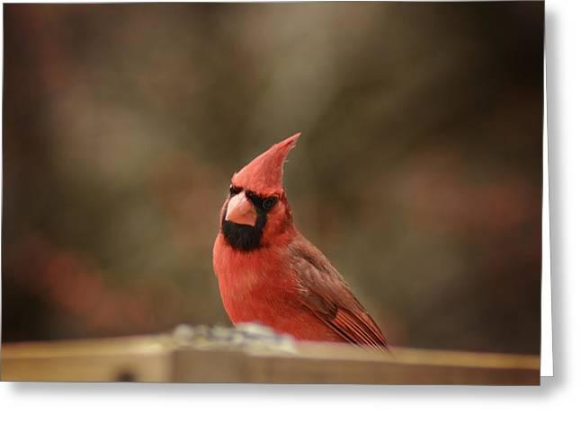 Cardinals Greeting Card
