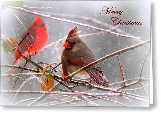 Cardinals - Male And Female - Img_003card Greeting Card by Travis Truelove