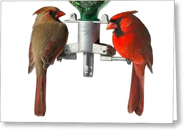 Cardinals On White Greeting Card by John Kunze