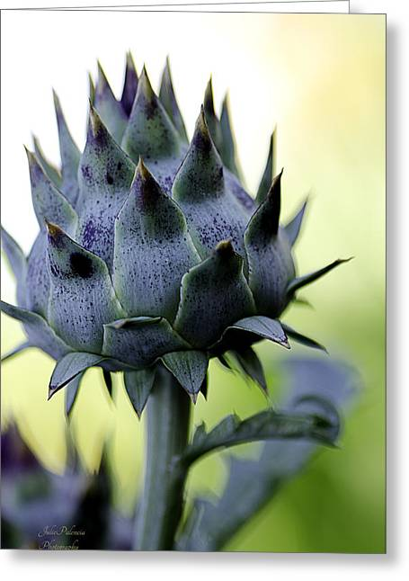 Cardoon Waiting To Bloom Greeting Card by Julie Palencia