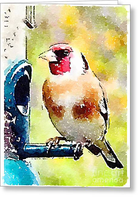 Carduelis Carduelis 'waterfinch' Greeting Card