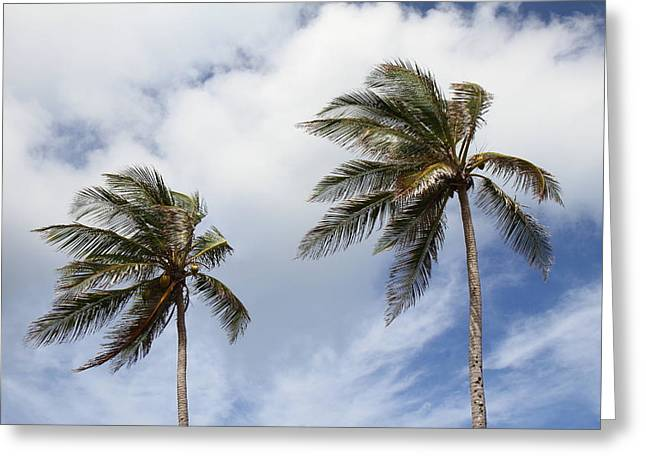 Caribbean Cruise - Barbados - 1212100 Greeting Card by DC Photographer